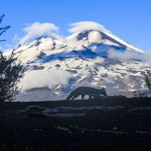 Zorro – Volcan Llamai, Chili
