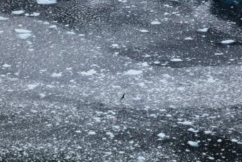 Immensité glacière – Antarctique