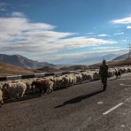 Plaine de l'Ararat, Arménie